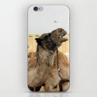 israel iPhone & iPod Skins featuring Israel Camels - Negev Desert by Rachel J