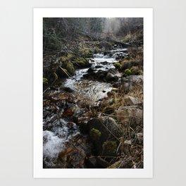 Wilderness Stream Art Print