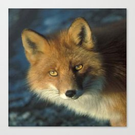 Red Fox in the Wild Canvas Print