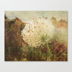 Queen Anne's Lace Sunset Canvas Print