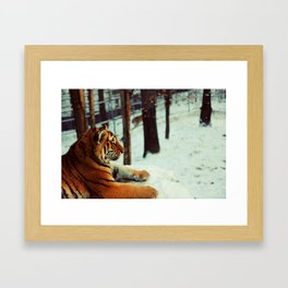 Winter afternoon Framed Art Print