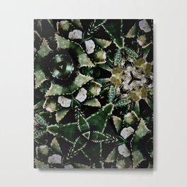 Succulents on Show No 1 Metal Print