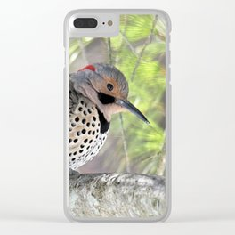 Northern Flicker Showing His Colors Clear iPhone Case