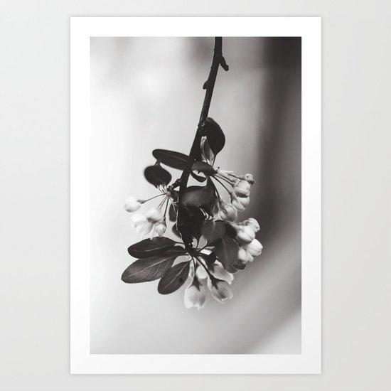spring sprung Art Print