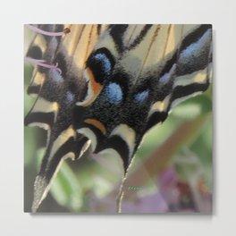 Detail of a Swallowtail Metal Print