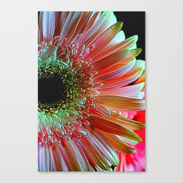 Pink Daisy Sideview Canvas Print