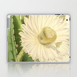 Strophocactus testudo Laptop & iPad Skin