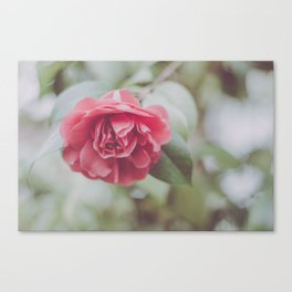 Rose Tree Canvas Print