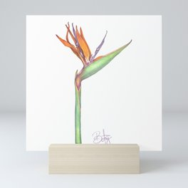 Birds of Paradise flower, Strelitzia Reginea. Mini Art Print
