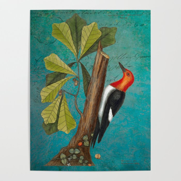 Red Headed Woodpecker with Oak, Natural History and Botanical collage Poster