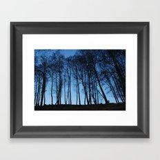 Birches from below Framed Art Print