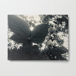 "Monochrome Botanical Art ""Raspberry Leaf sunset"" Metal Print"