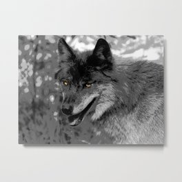 Alpha Male Wolf Metal Print