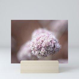 California Buckwheat Mini Art Print