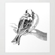 Cute Fluffy Bird Sleeping Art Print