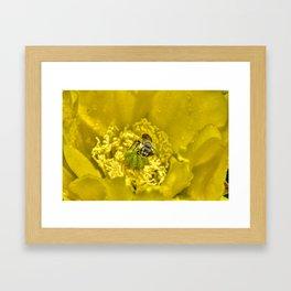 Rainy Day Cactus Flower Bee Framed Art Print