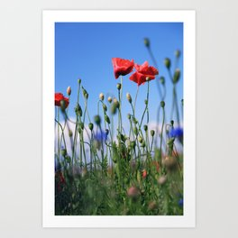 poppy flower no10 Art Print