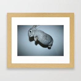 The Flying Rabbit Framed Art Print