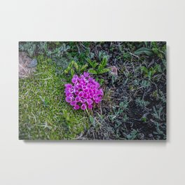 A Dash of Pink at the Top of the World Metal Print