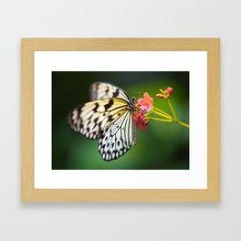 Believe in Fairies Framed Art Print