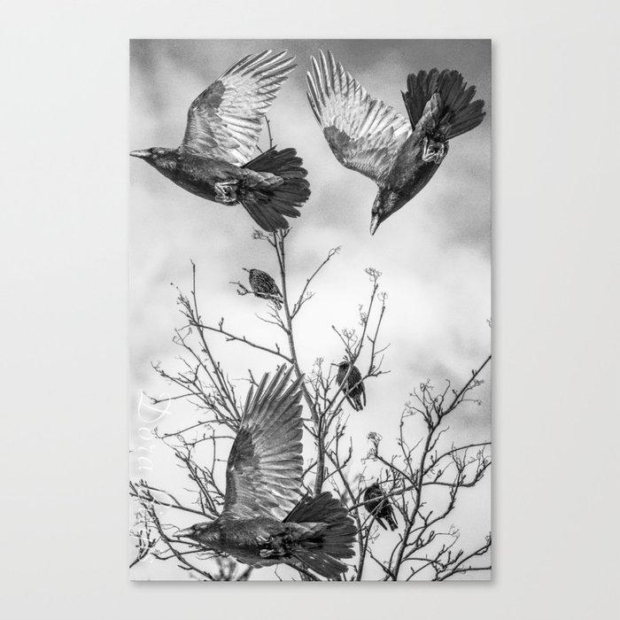 Krummar (raven) Canvas Print