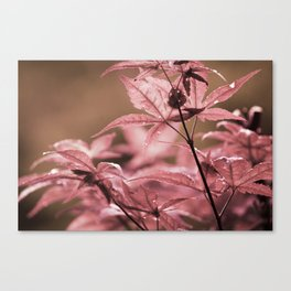Tread, like a naked Venus Canvas Print