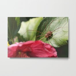 Spider on a hibiscus flower Metal Print