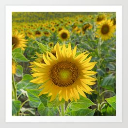 Sunflower. Summer dreams Art Print