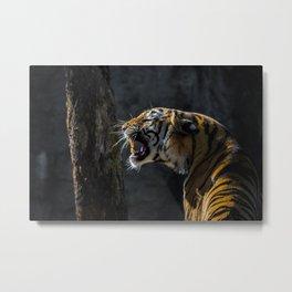 Ferocious Bengal Tiger Metal Print