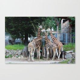 Animal Planet Canvas Print