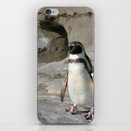Humboldt Penguin iPhone Skin
