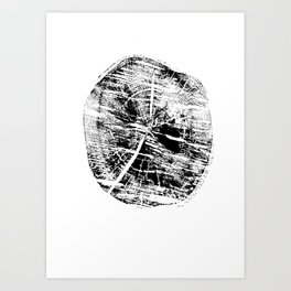 fragment birch Art Print