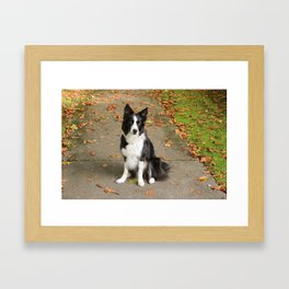 Sparkles the Border Collie Framed Art Print