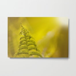 Dryopteris called wood fern leaf and sunbeam Metal Print