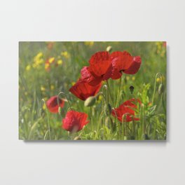 Poppies in Yorkshire Metal Print