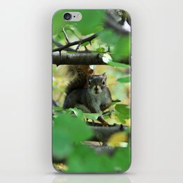 Curious Squirrel iPhone Skin