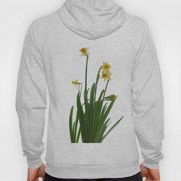 Narcissus flower Hoody