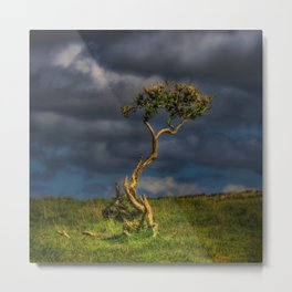Survive I Will - Lone Gorse on Windswept Moors Metal Print