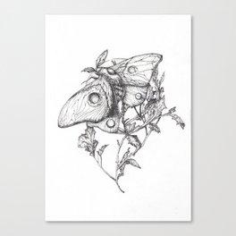 Moon Moth Canvas Print