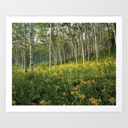 Kebler Pass Wildflowers Art Print