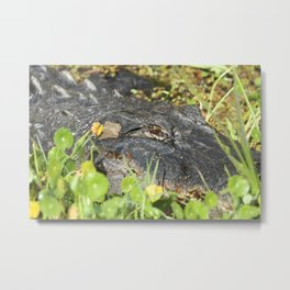 Alligator Close-Up Metal Print