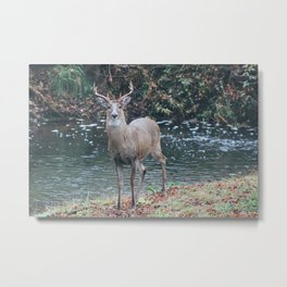 Lost & Found Deer Metal Print