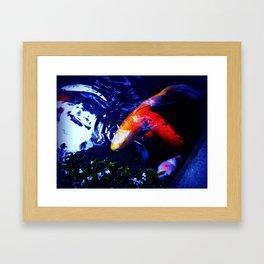 Koi Fish play coy Framed Art Print