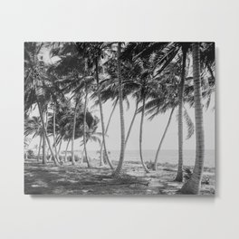 Miami Florida Palm Trees Black and White Vintage Photograph, 1915 Metal Print