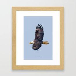 Majestic May Bald Eagle Framed Art Print