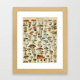 Mushrooms Vintage Scientific Illustration French Language Encyclopedia Lithographs Educational Framed Art Print
