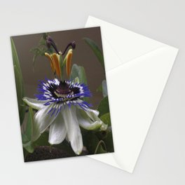 Side View of Beautiful Passiflora Flower Stationery Cards