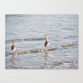 Santa Barbara Sea Birds 2477 Canvas Print