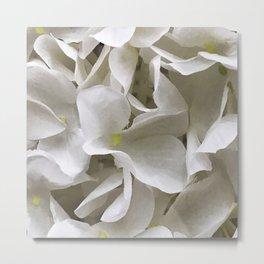 Ivory White Flowers In Elegant Shadows Metal Print