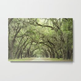 Georgia Oak Alley Metal Print
